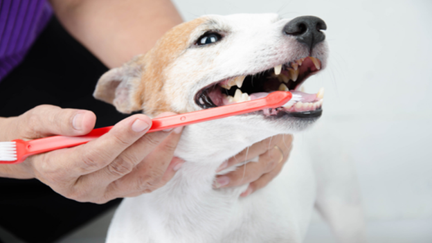 dog dental hygiene tips from companion animal medical center in visalia california